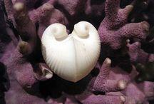 Shells & Urchins