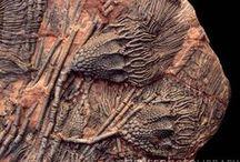 Fossils, Bones & Rocks