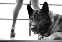 Beatiful Wolf  / La vida de Kuri el lobo ❤️