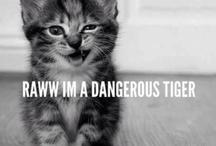 Cat Cuteness for Adam & Megs