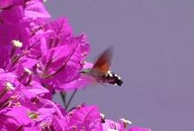 Insects and other little ones by Geminiature / Butterflies, spiders, snails, beatles etc.