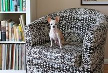 Pet-Friendly Apartment Living / Tips for living in your Lofts at Peloton apartment with pets.