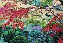 Beautiful gardens / Puutarhojen kukkaloistoa