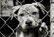 Strong Pictures of cruelty