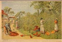 Affiches anciennes du Musée du Vivant - AgroParisTech / Un aperçu des collections du Musée du Vivant