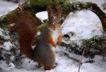 Squirrels so cute