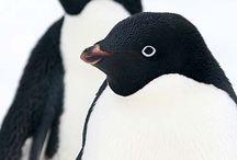 Penguins! / My favorite animal