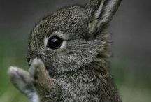 Cute/Beautiful Animals