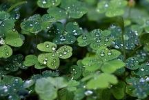 St. Patrick's Day / by Lana Sladen