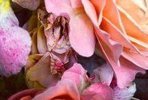 ... roses