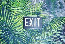 Jungle in my head