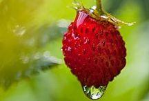 i love strawberries / Erdbeeren, Rezepte, Sommer