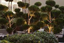 City 1 / Roof garden designed by William Dangar 2010.