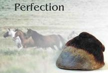 Hooves / The beautiful the bad and the ugly of barefoot hooves and associated paraphernalia