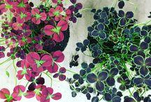 Växter som jag aldrig kommer kunna ha för att de vill ha 1000% luftfuktighet