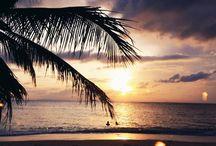 Tropical live