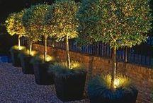 Glorious Garden Ideas