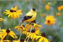 Birds / I love birds / by Dolly Hartner