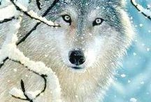 ALL Creatures GREAT & small... I love them all / Love me... love, my love of animals