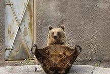 Random - From Bear / The stuff my Hubbie finds amusing.