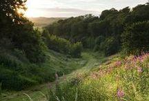 Nature / Landscapes, stones, plants, lower animals