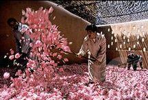 Lovely roses... / Ontdek de mooie rozenvallei in Marokko bij Kelaa M'Gouna. Ieder jaar is het groot feest als de rozen geoogst worden. Er worden daarna de heerlijkste beautyproducten gemaakt.