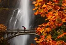 Bridges & Walkways / by Judy 'Isaacs' Herrig