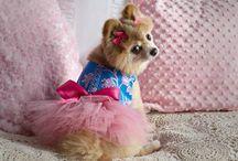 Pom Mom loves tiny dogs / by Judy 'Isaacs' Herrig