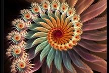spirals / love spirals they are the essence of life.....