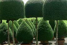 im Grünen