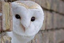 O for OWEL