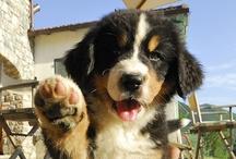 Puppies make the world go round