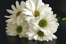 Flowers I LOVE! / by Laura Johnson