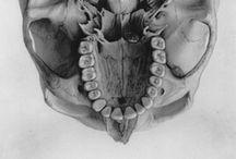 skull&flesh