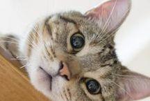 viva i gatti !!!!