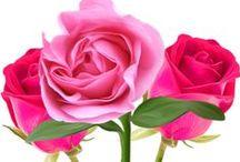 gif ruže