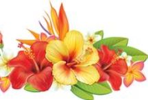 gif kvety
