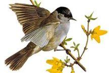 gif vták
