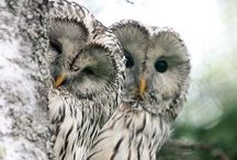 Owls/Uilen