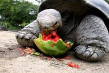 documentary / documetary and guesss what issa got turtles tooo oo