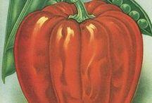 Botanical Illustrations / botanic, typography, calligraphy,