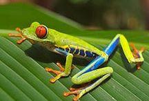 Grodor / Frogs