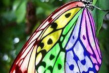 Fjärilar / Butterflies / Sommarfugl