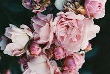 &FLOWERS