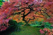 Beautiful Trees / The magic wonder of trees