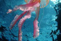 Jellyfish / How I love the jellies.