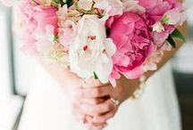 &WEDDING / someday.