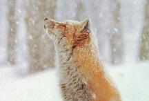 Animal Lover / by Kris Gamil