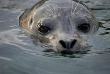 Marine Wildlife - Salish Sea