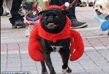 2013 Krewe Of Barkus / 2013 Krewe Of Barkus - Mardi gras Dog Parade - McKinney, TX